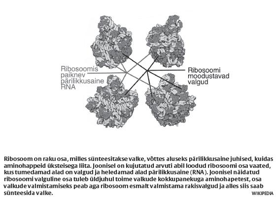 sirp15_ribosoom